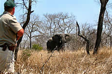 WildLife Excursions with Echo Africa