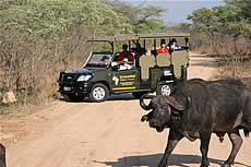 Game Drives in the Kruger National Park