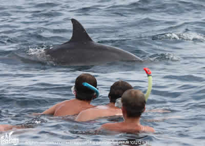 Mozambique Accommodation - Mozambique beach accommodation - Mozambique self catering accommodation at Dolphin Encounters