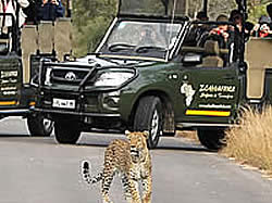 Day Tours into the world renowned Kruger National Park